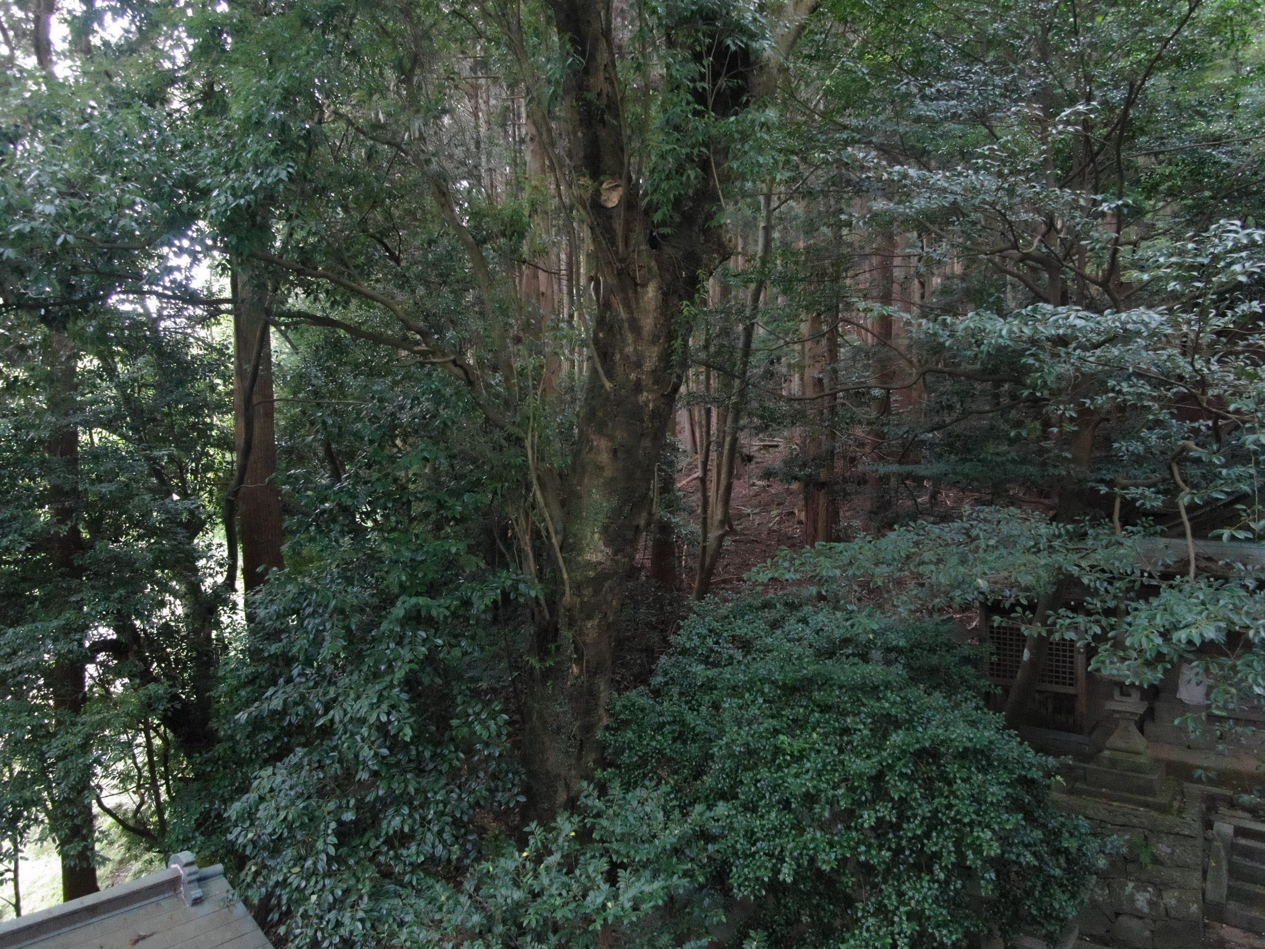住吉神社 樹木調査